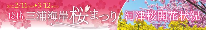 三浦海岸 河津桜情報「お得な宿泊プランや特典付きランチフェア開催!」