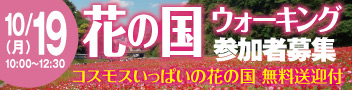 くりはま花の国ウォーキング コスモスの花でいっぱいの花の国で歩こう♪
