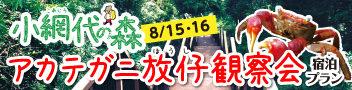 小網代の森 アカテガニ放仔観察会 宿泊プラン 夏の思い出に!小網代の森最大の夏イベントです。